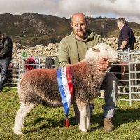 2017 World Champion Herdwick