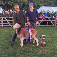 2018 World Champion Herdwick