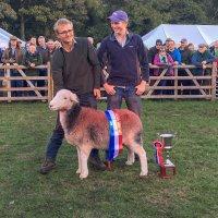 World Champion Herdwick